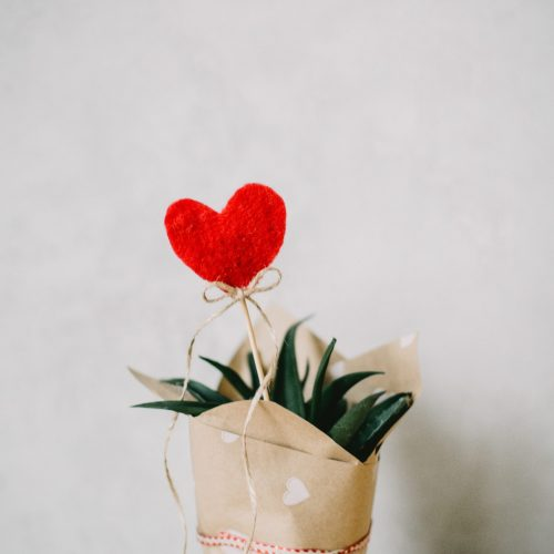 red-heart-ornament-and-aloe-vera-plant-covered-with-paper-873083